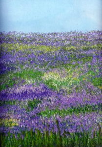 fields-in-lilac-whats-on-image
